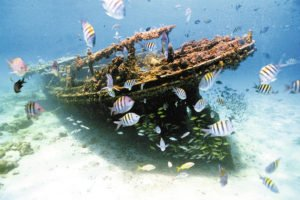 Barbados Shipwreck and tropical fish
