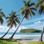 KINGSTOWN, ST VINCENT beach with palm trees