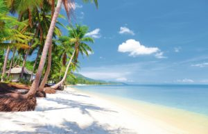 Beach with palm trees in Thailand
