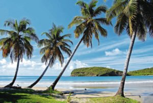 Marella Cruises Caribbean Cruise - beach with palm trees